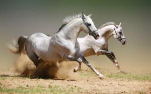 Cao ngựa Bạch là tốt nhất