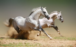 Cao ngựa