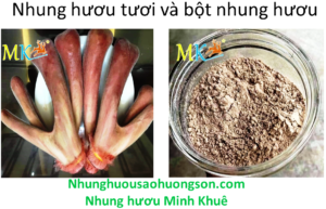 nhung huou tuoi so voi bot nhung huou